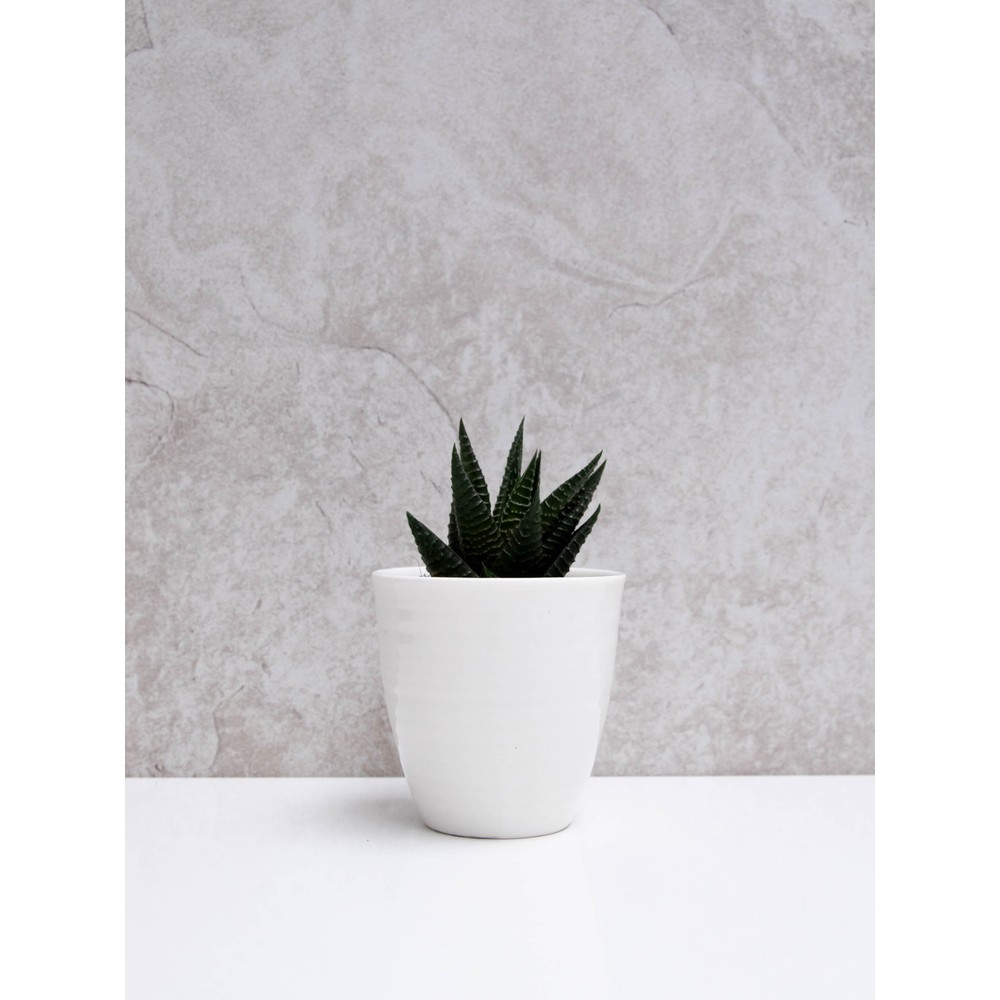 Chalk Home Porcelain Pot  White