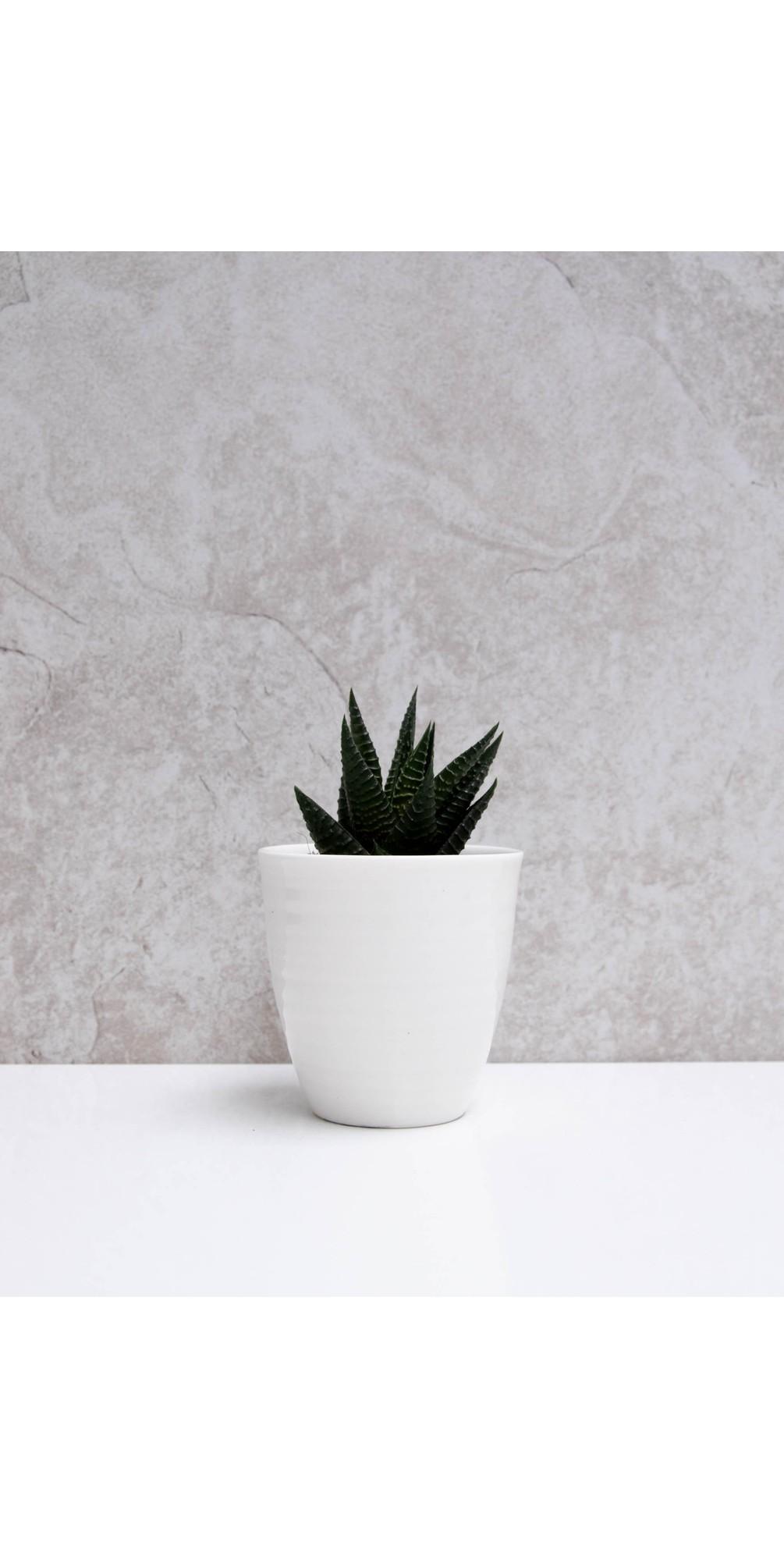 Porcelain Pot  main image