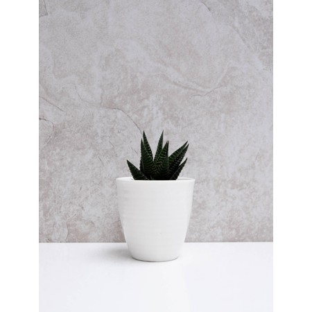 Chalk Home Porcelain Pot  - White
